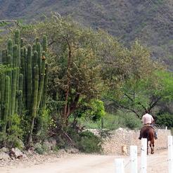Kaktus und Cowboy