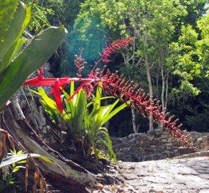 Rot blütende Pflanze, die auf Bäumen wächst.