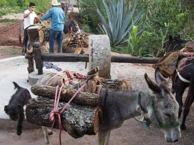 Holz heranführen bei Don Fidel.