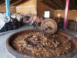 Zerkleinern der gerösteten Piñas.